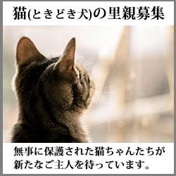 猫ときどき犬の里親募集